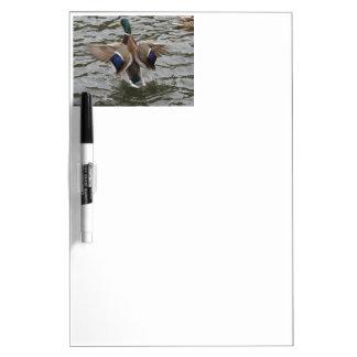Mallard Duck Male Dry Erase Boards