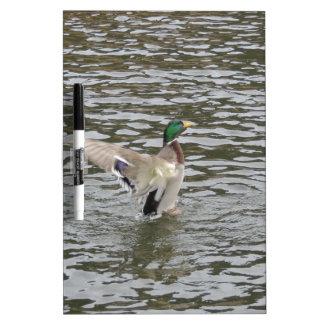 Mallard Duck Male Dry-Erase Whiteboards