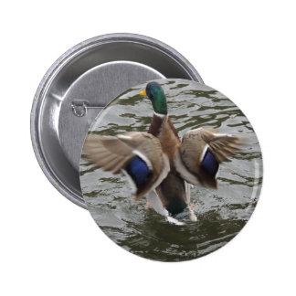 Mallard Duck Male Pinback Button