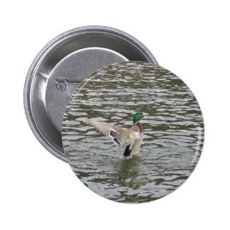 Mallard Duck Male Pinback Buttons