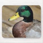 Mallard Duck Mouse Pads
