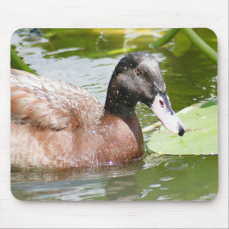 Mallard Duck Mousepad