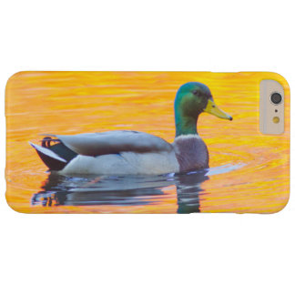 Mallard duck on orange lake, Canada Barely There iPhone 6 Plus Case