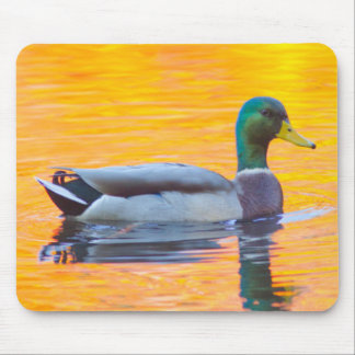 Mallard duck on orange lake, Canada Mouse Pad