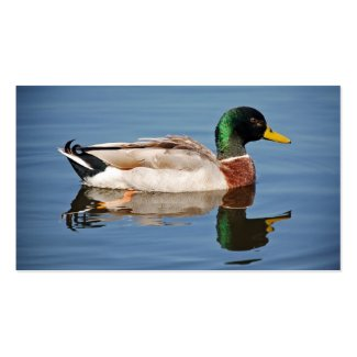 Mallard Duck on Water profilecard