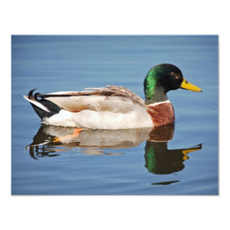Mallard Duck on Water Card
