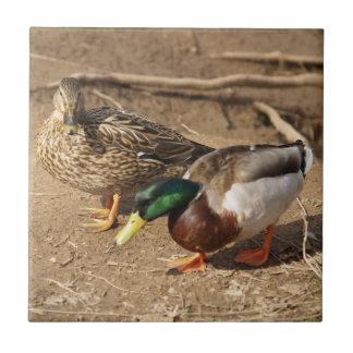 Mallard Duck Pair Wildlife Tile
