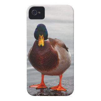 Mallard Duck Photo iPhone 4 Cases