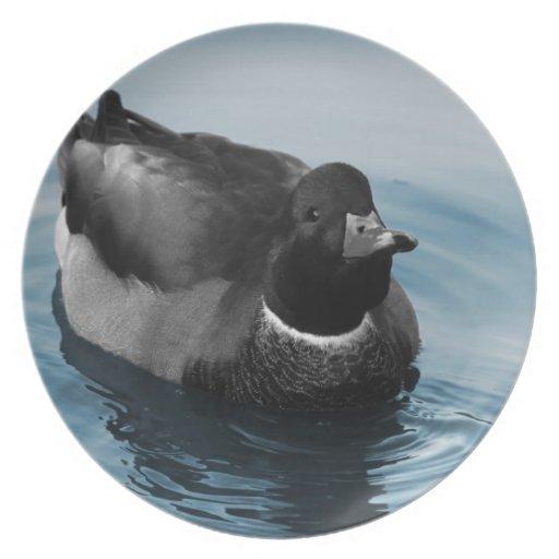 Mallard Duck Photo Dinner Plate
