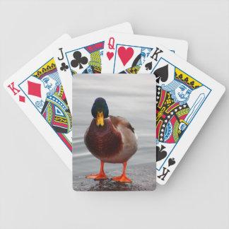 Mallard Duck Photo Card Deck