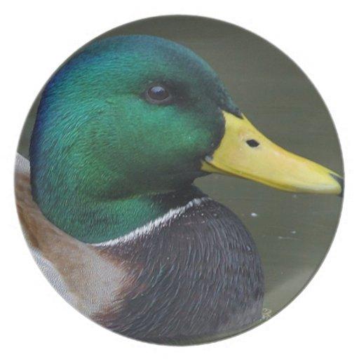 Mallard duck dinner plate