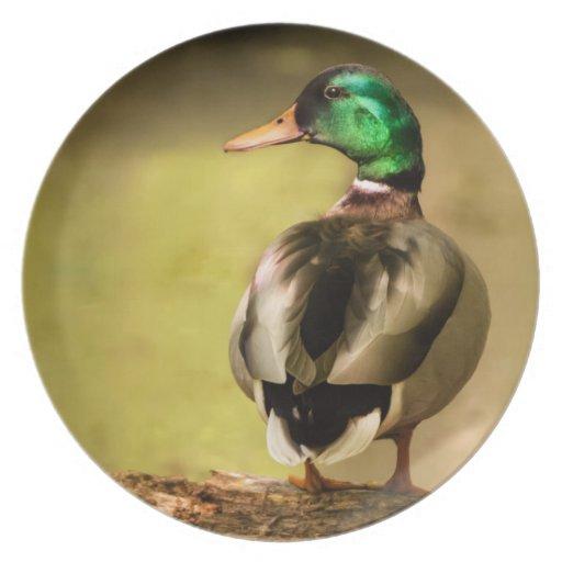 Mallard Duck Party Plate