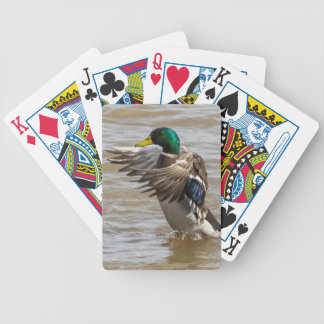 Mallard Duck Playing Cards