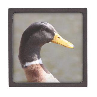 Mallard Duck Premium Gift Boxes