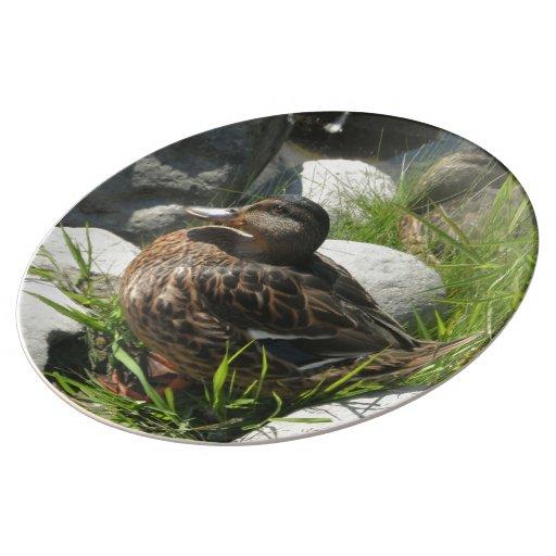 Mallard Duck Relaxing in Grass Porcelain Plates