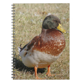 Mallard Duck Spiral Photo Notebook