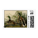 Mallard Duck Stamps
