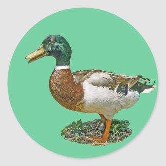 Mallard Duck Stickers
