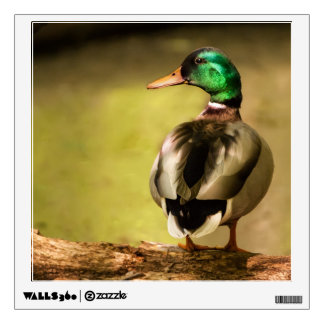 Mallard Duck Wall Decal