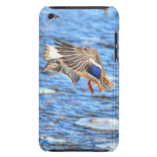 Mallard Duck Wildlife Photo for Bird-lovers Barely There iPod Covers