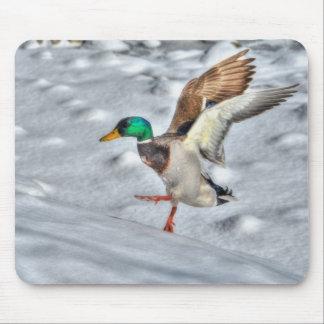 Mallard Duck Wildlife Photo for Bird-lovers Mouse Pad