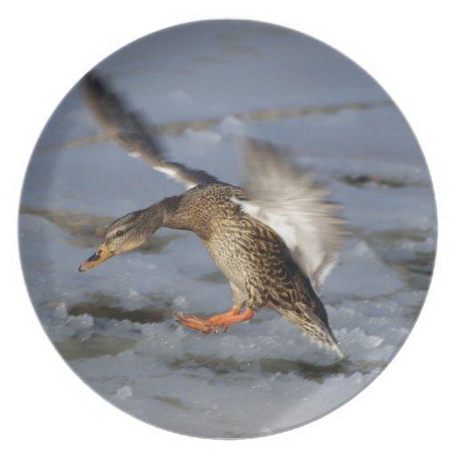 Mallard Duck Wildlife Pond Bird Plate