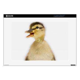 Mallard duckling (Anas platyrhynchos) Laptop Decals