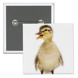 Mallard duckling (Anas platyrhynchos) Pinback Button