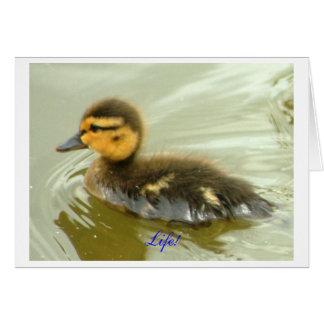Mallard Duckling Solo Greeting Cards