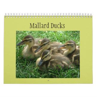 Mallard Ducklings Calendar