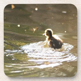 Mallard Ducklings Drink Coaster