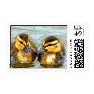 Mallard Ducklings Postage