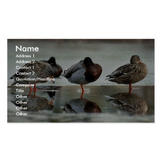 Mallard Ducks Business Card Template