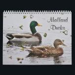 "Mallard ducks calendar<br><div class=""desc"">A collection of both male and female mallard ducks to enjoy through the year..</div>"