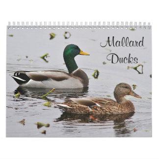 Mallard ducks calendar