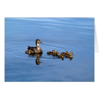 Mallard ducks card