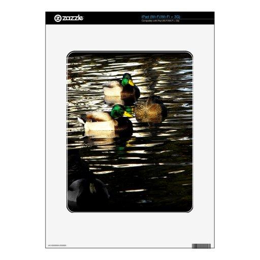 Mallard Ducks in a Pond Decals For iPad