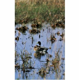 Mallard ducks in a Wetland Acrylic Cut Outs