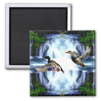 Mallard ducks refrigerator magnet