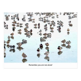 Mallard Ducks on a Frozen Pond Postcard