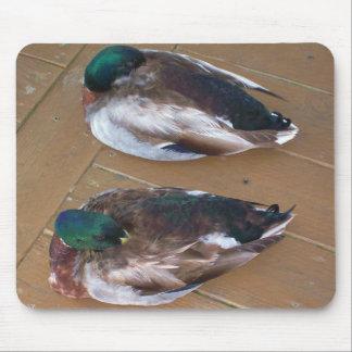 Mallard Ducks On The Dock Mousepad