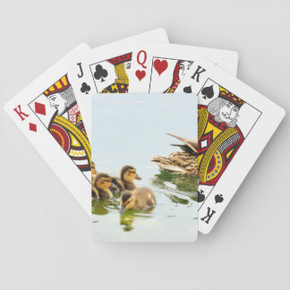 mallard ducks playing cards