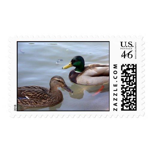 Mallard Ducks Postage