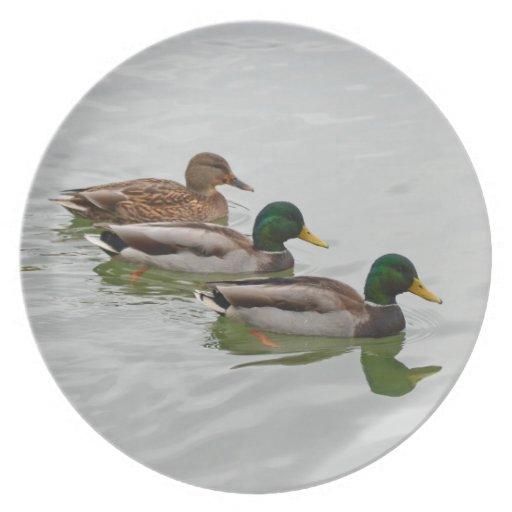 Mallard ducks print plate