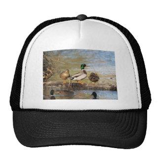 Mallard Ducks Trucker Hat