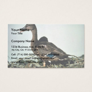 Mallard Female Business Card
