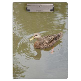 mallard hen in water duck animal feather bird clipboard