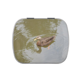 mallard hen in water duck animal feather bird jelly belly candy tin