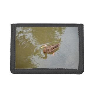 mallard hen in water duck animal feather bird tri-fold wallet