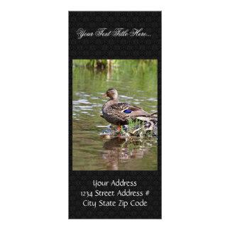 Mallard Hen Rack Card